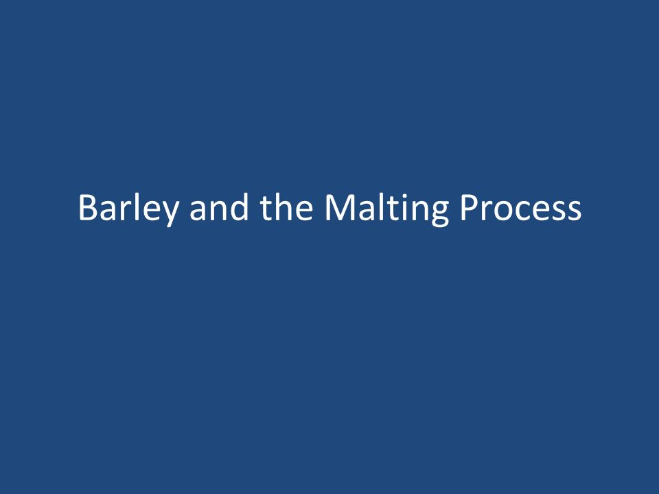 Barley and the Malting Process