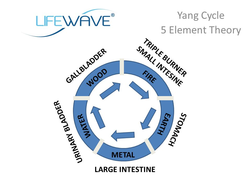 Yang Cycle 5 Element Theory