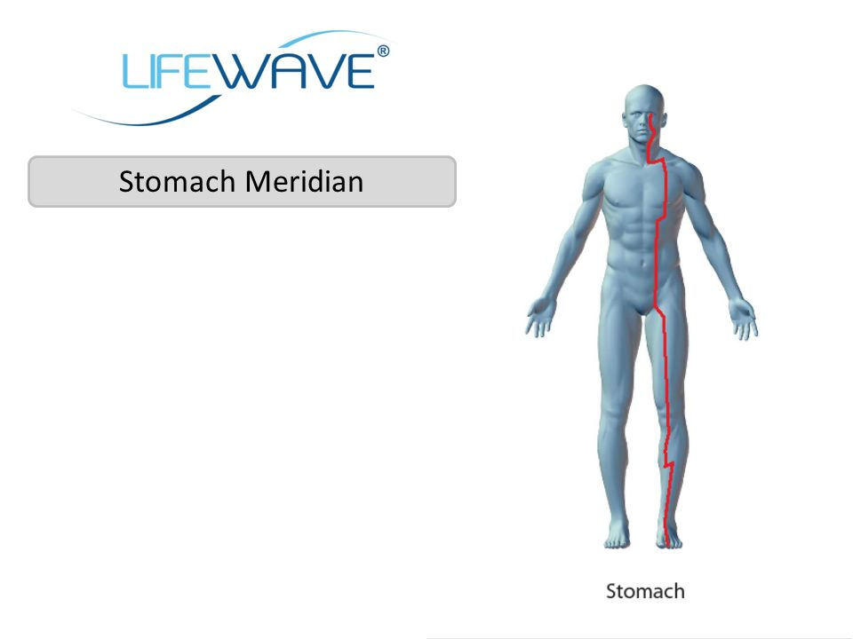 Stomach Meridian