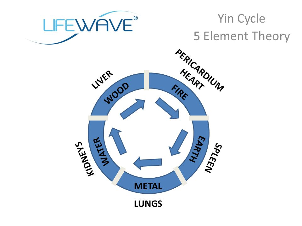 Yin Cycle 5 Element Theory PERICARDIUM HEART LIVER WOOD FIRE WATER