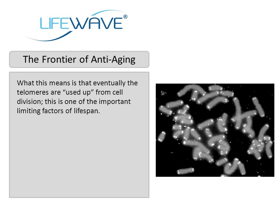The Frontier of Anti-Aging