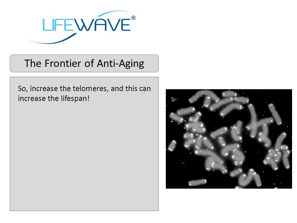 So, increase the telomeres, and this can increase the lifespan!