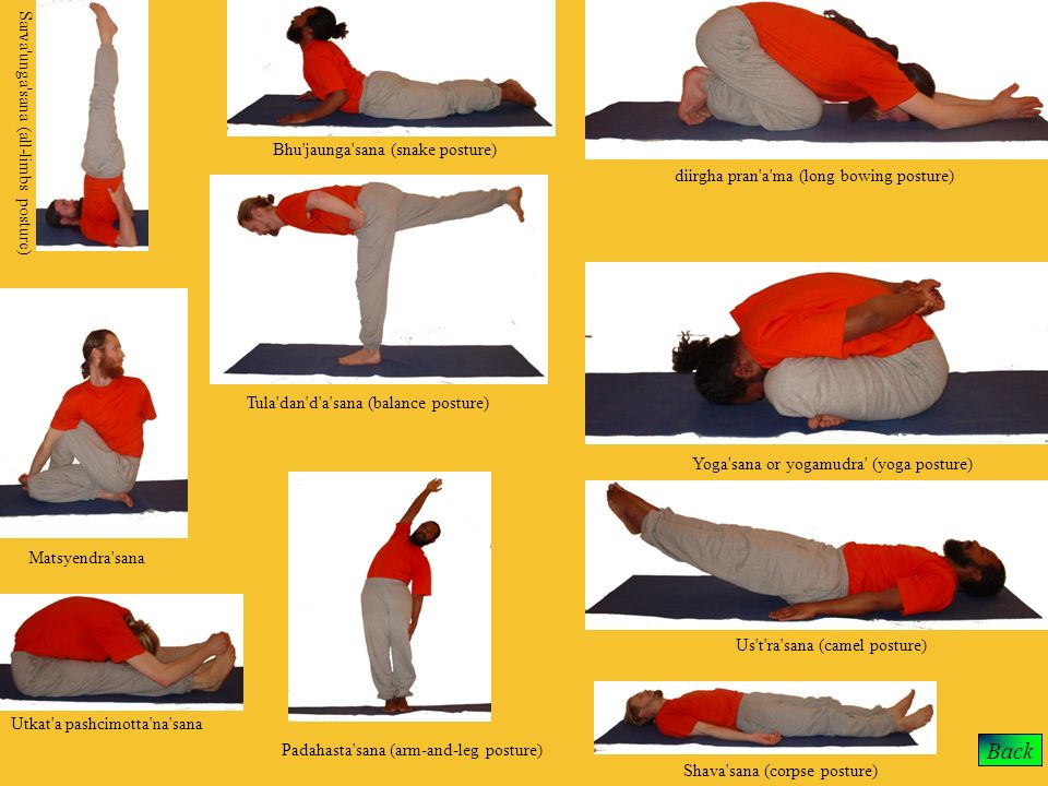 Back Sarva unga sana (all-limbs posture)