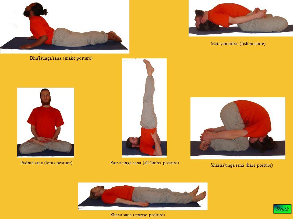 Back Matsyamudra (fish posture) Bhu jaunga sana (snake posture)
