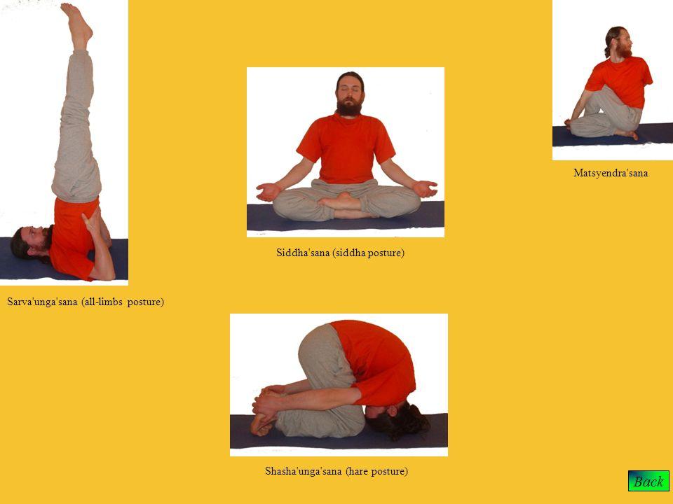 Back Matsyendra sana Siddha sana (siddha posture)