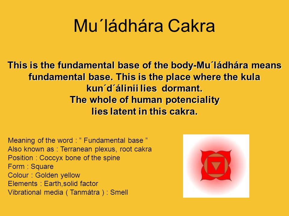 The whole of human potenciality lies latent in this cakra.