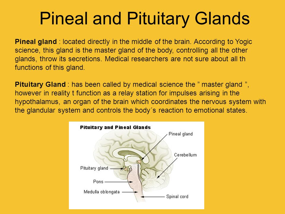 Pineal and Pituitary Glands