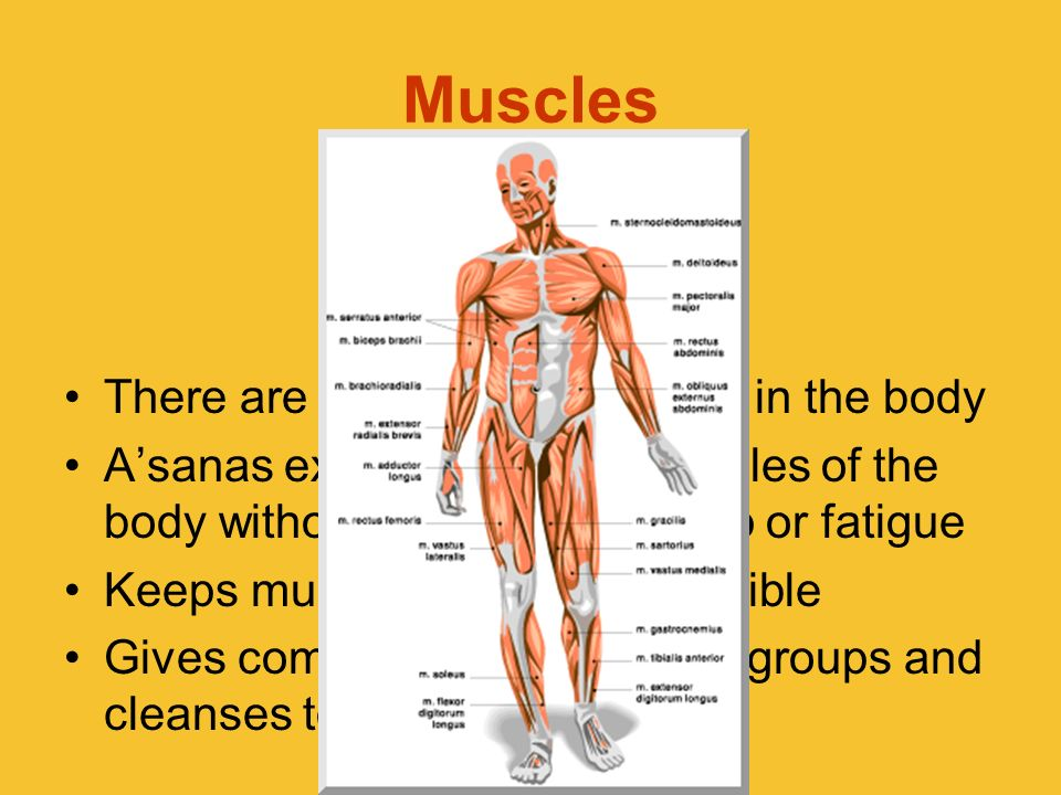 Muscles There are 640 named muscles in the body