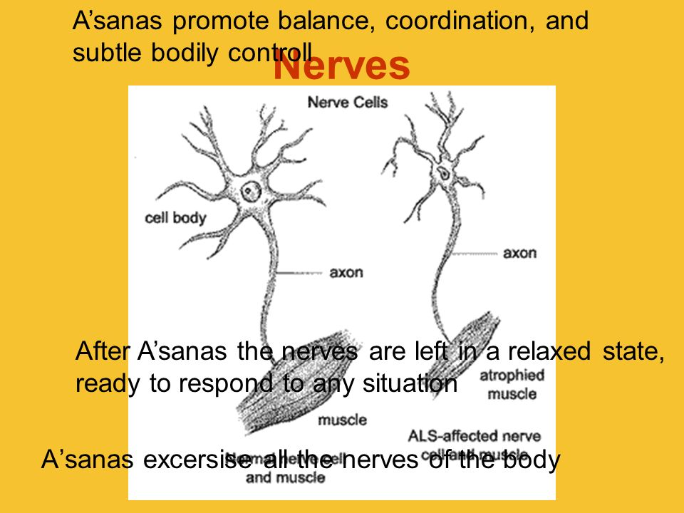 A'sanas promote balance, coordination, and subtle bodily controll