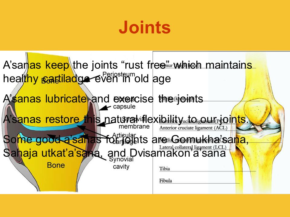 JointsA'sanas keep the joints rust free which maintains healthy cartiladge even in old age. A'sanas lubricate and exercise the joints.