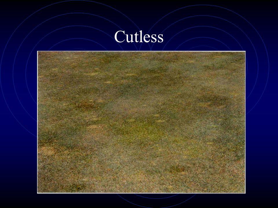 Cutless