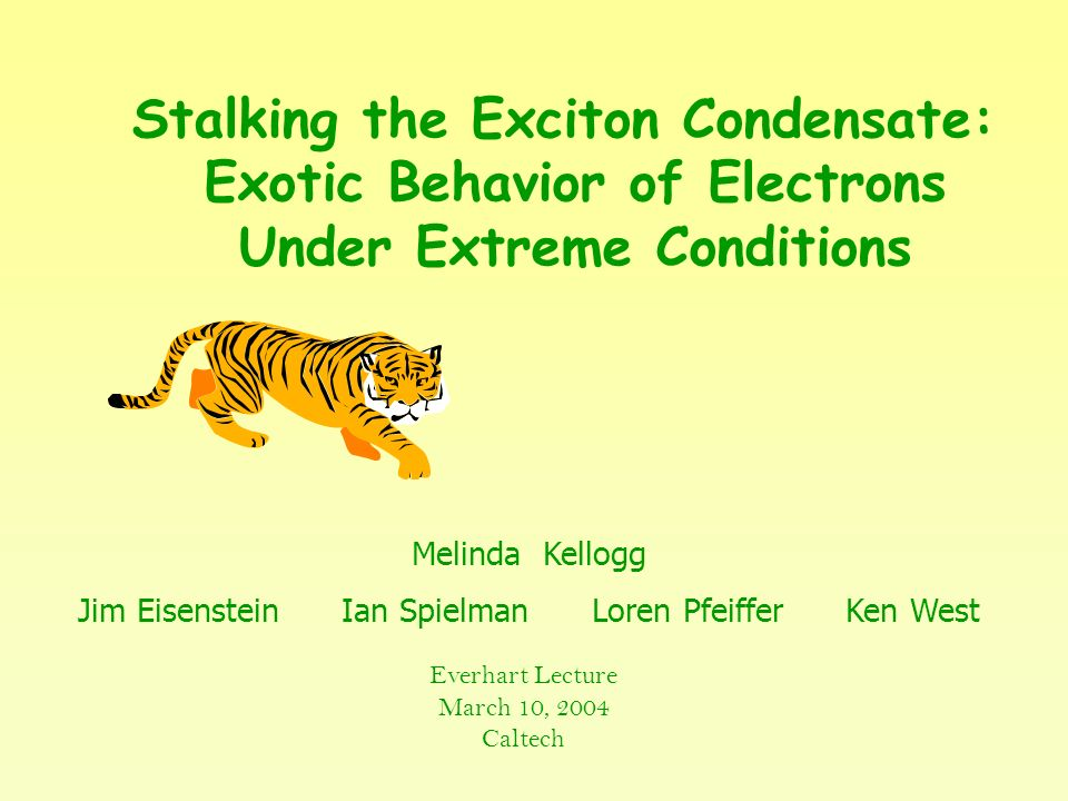 Stalking the Exciton Condensate: Exotic Behavior of Electrons