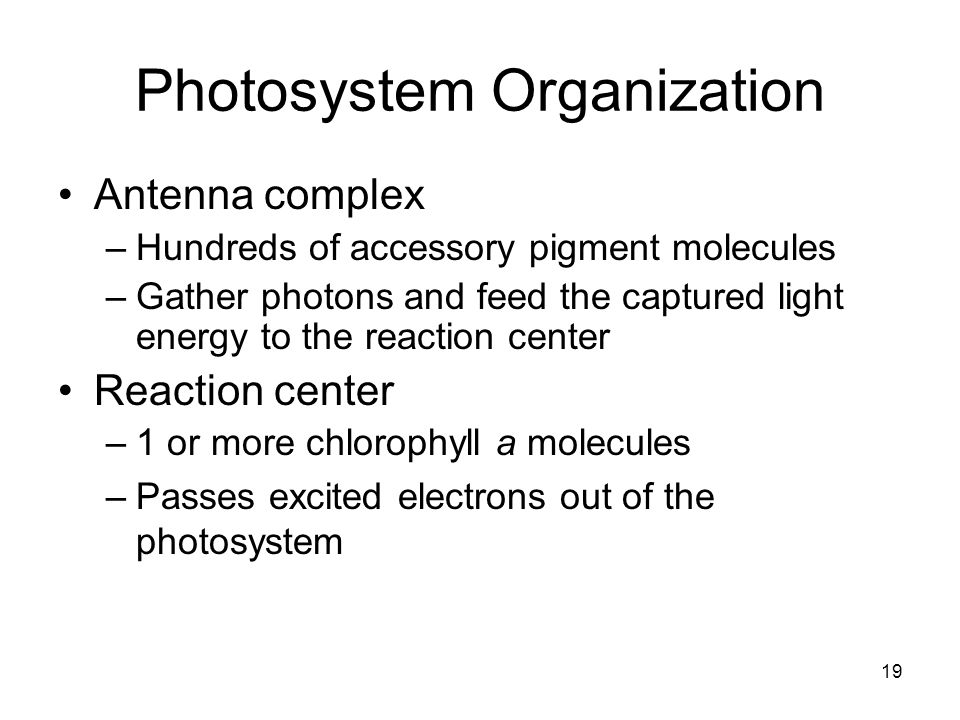 Photosystem Organization