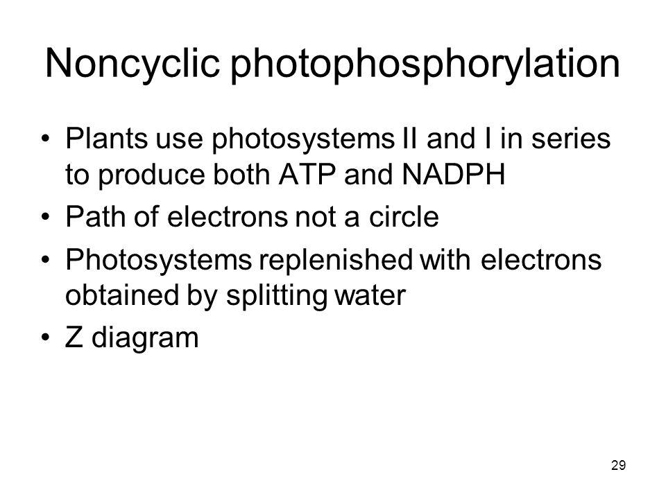 Noncyclic photophosphorylation