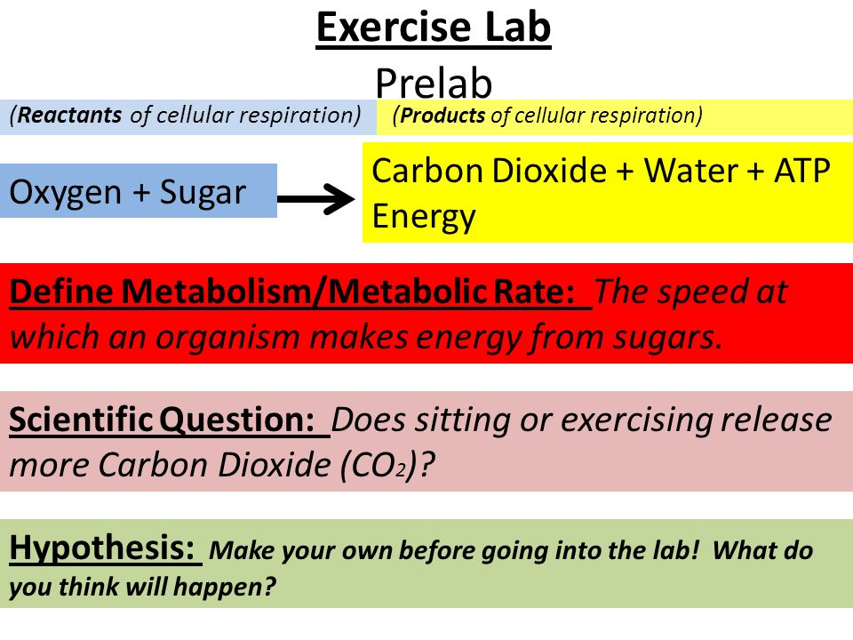 Exercise Lab Prelab Carbon Dioxide + Water + ATP Energy Oxygen + Sugar