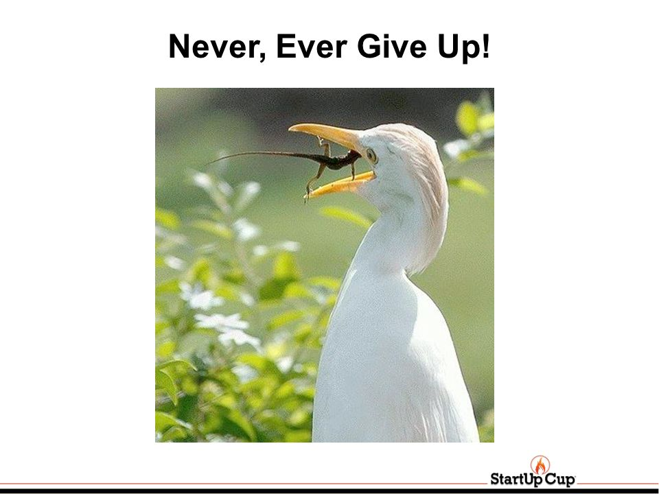 Never, Ever Give Up!