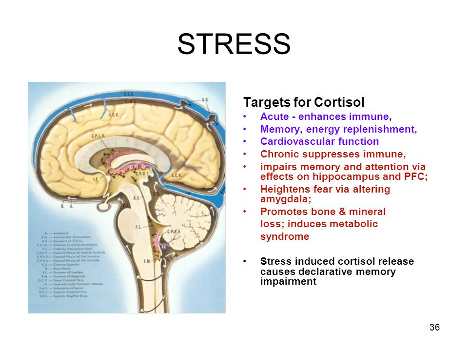STRESS Targets for Cortisol Acute - enhances immune,