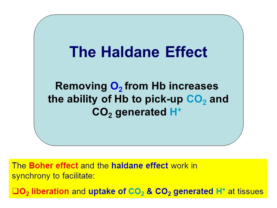 Removing O2 from Hb increases the ability of Hb to pick-up CO2 and