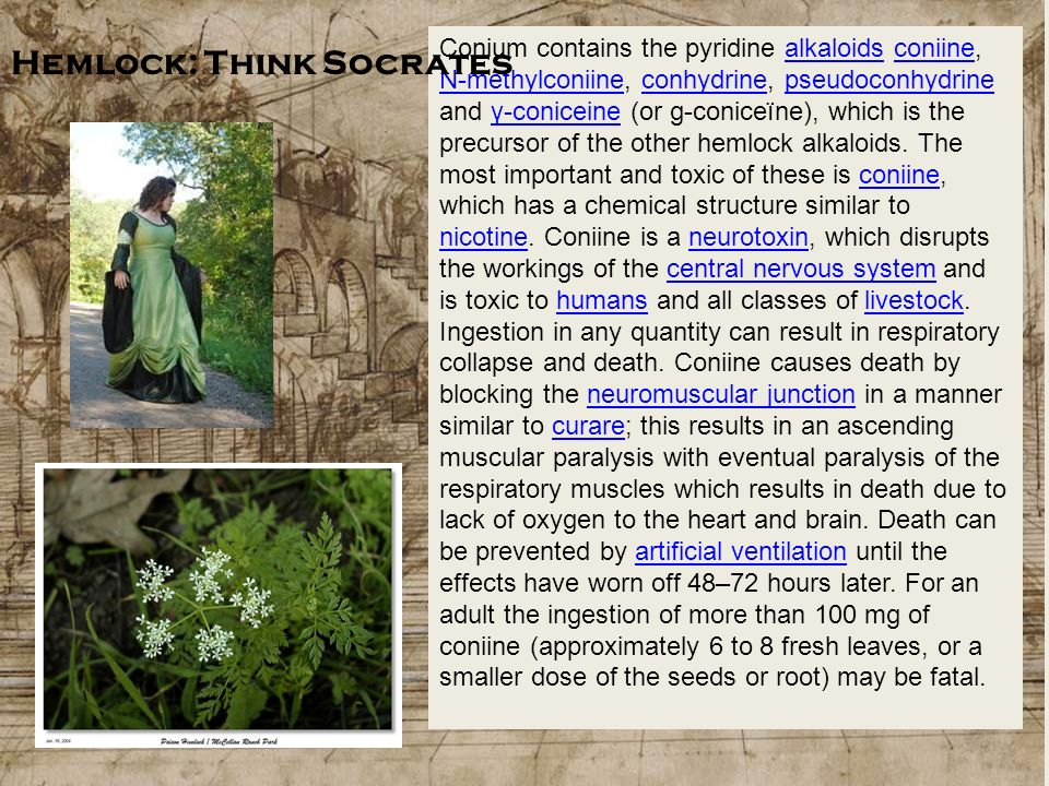 Hemlock: Think Socrates