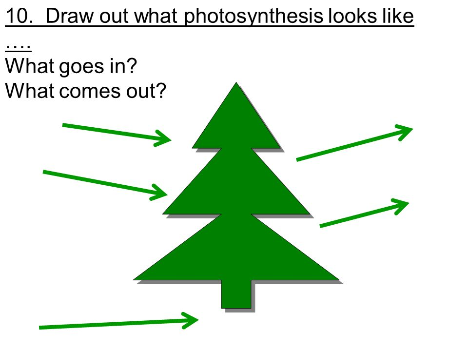 10. Draw out what photosynthesis looks like …. What goes in