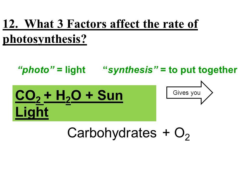 CO2 + H2O + Sun Light CO2 + H2O + Sun Light Carbohydrates + O2