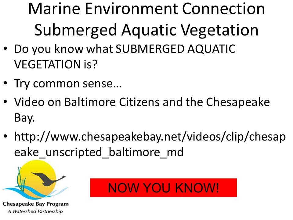 Marine Environment Connection Submerged Aquatic Vegetation