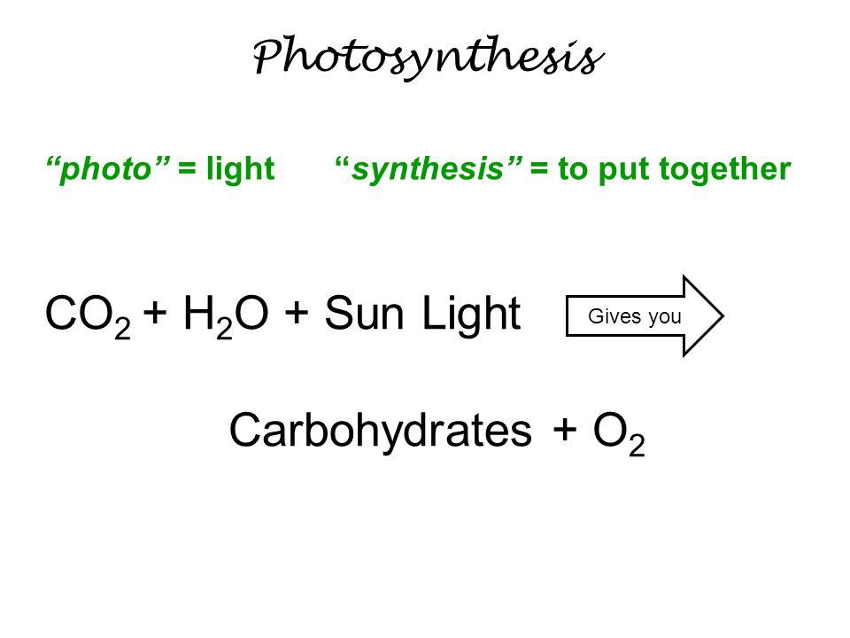 CO2 + H2O + Sun Light Carbohydrates + O2 Photosynthesis