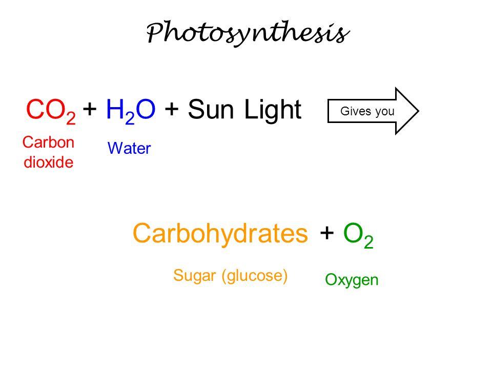 CO2 + H2O + Sun Light Carbohydrates + O2 Photosynthesis Carbon dioxide