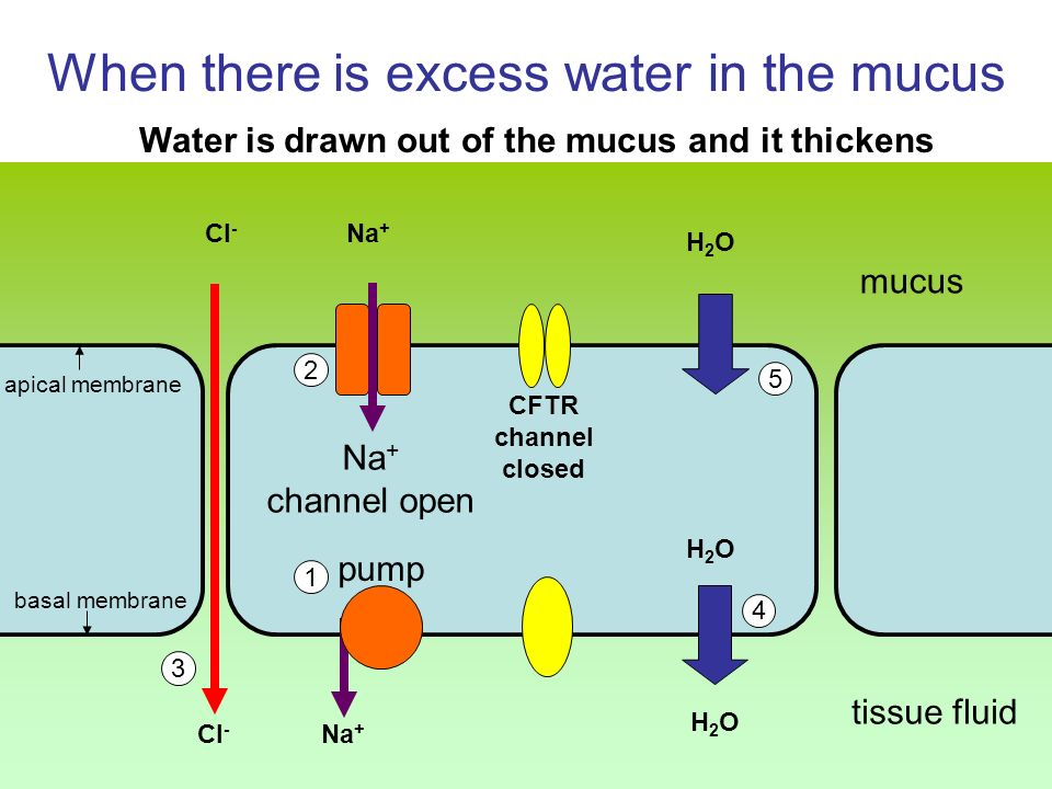 When there is excess water in the mucus