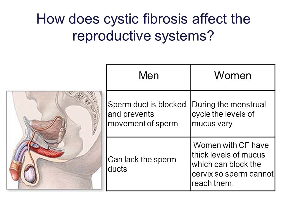 How does cystic fibrosis affect the reproductive systems