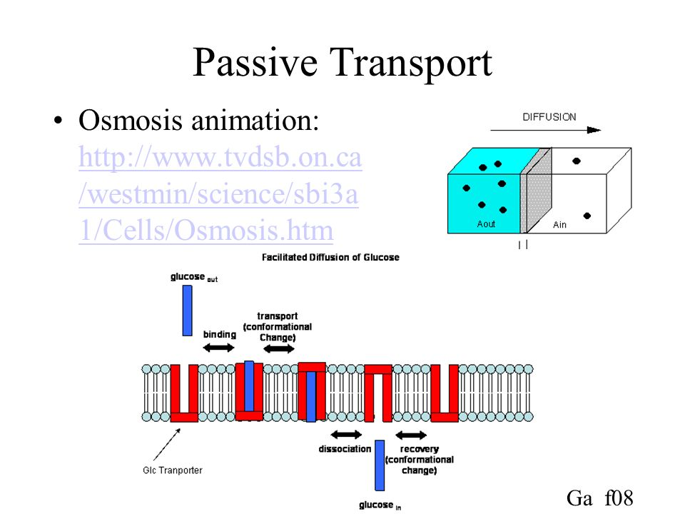Passive Transport Osmosis animation: http://www.tvdsb.on.ca/westmin/science/sbi3a1/Cells/Osmosis.htm.