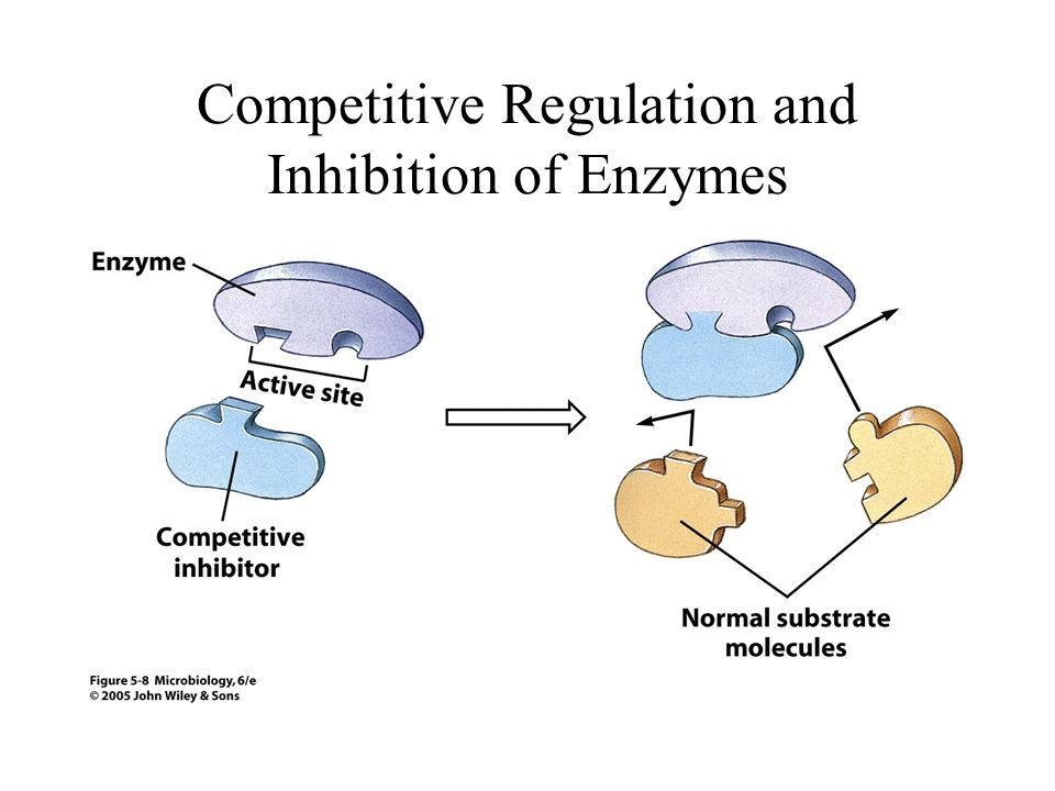 Competitive Regulation and Inhibition of Enzymes