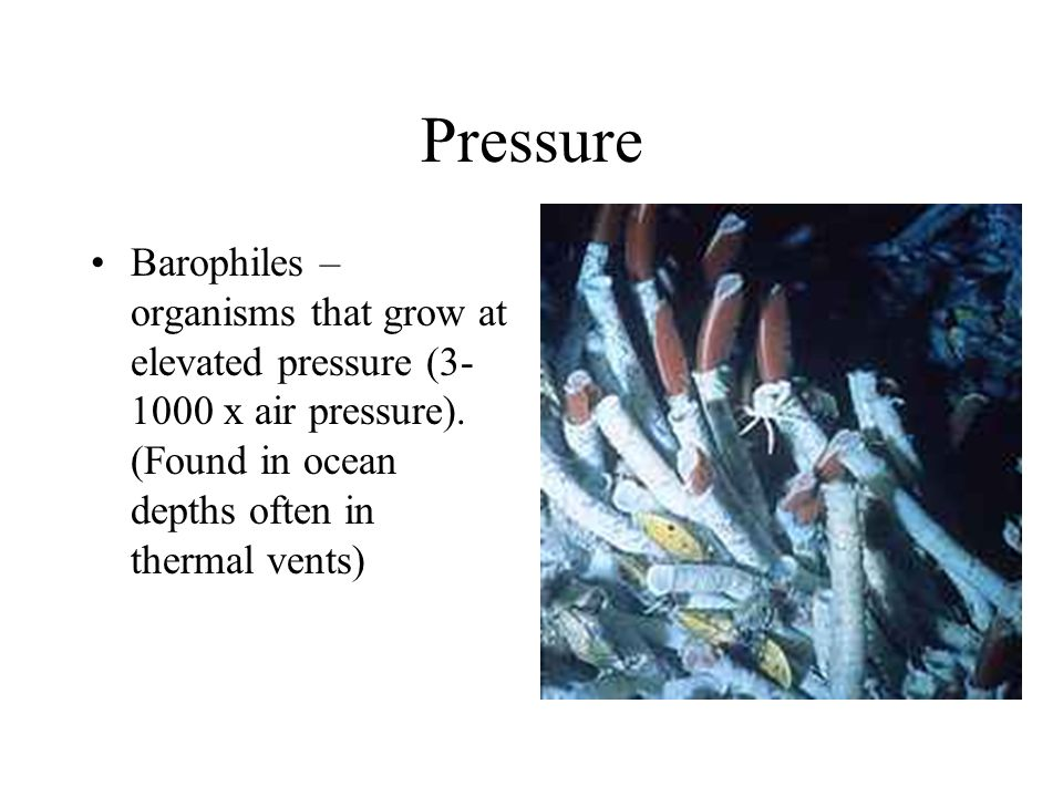 Pressure Barophiles – organisms that grow at elevated pressure (3-1000 x air pressure).