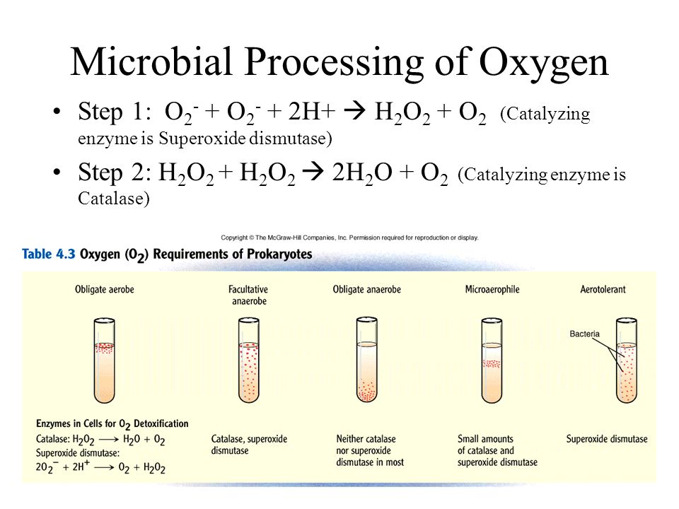 Microbial Processing of Oxygen