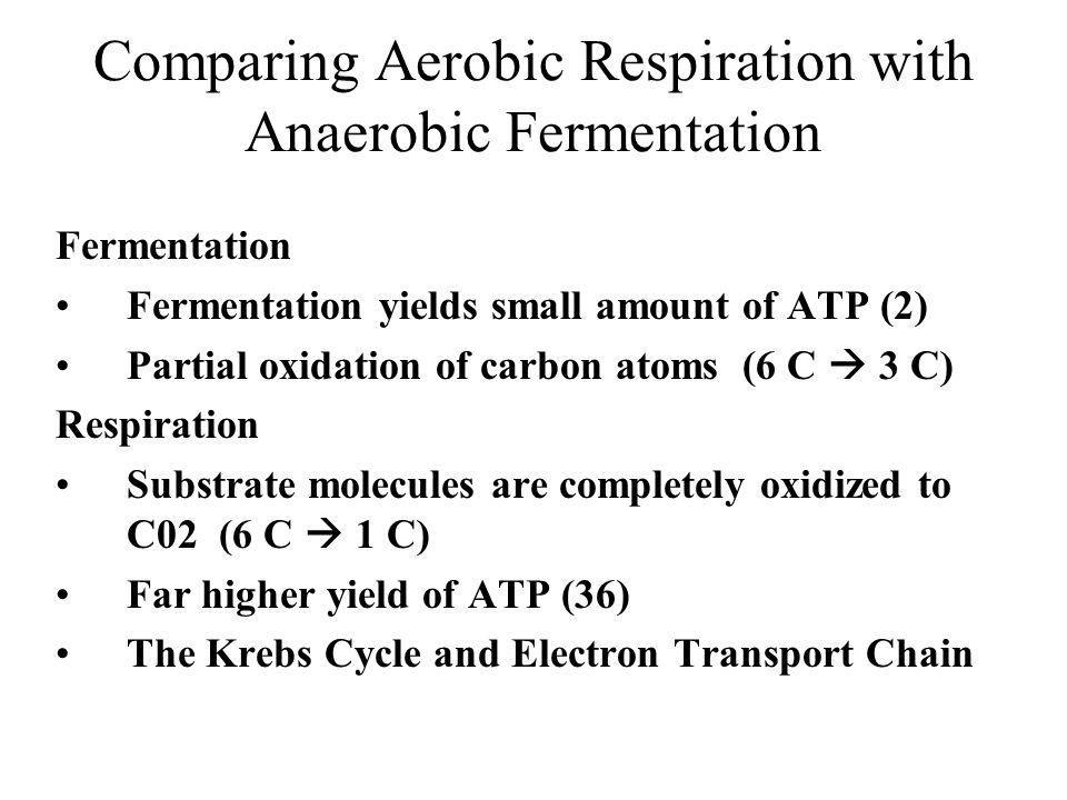 Comparing Aerobic Respiration with Anaerobic Fermentation