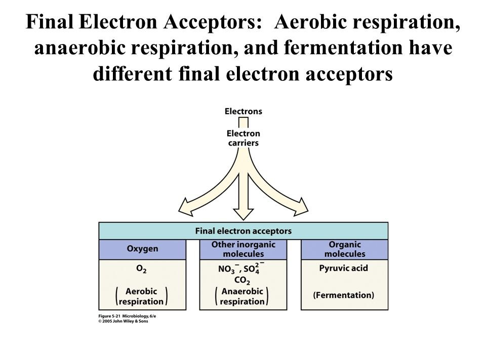 Final Electron Acceptors: Aerobic respiration, anaerobic respiration, and fermentation have different final electron acceptors