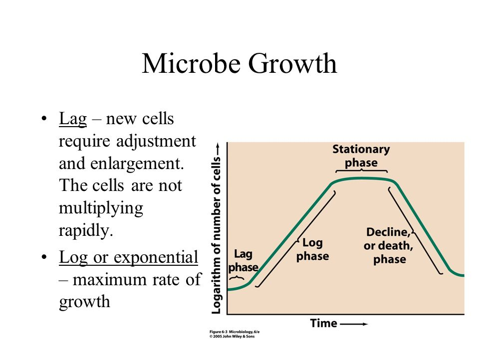 Microbe Growth Lag – new cells require adjustment and enlargement. The cells are not multiplying rapidly.