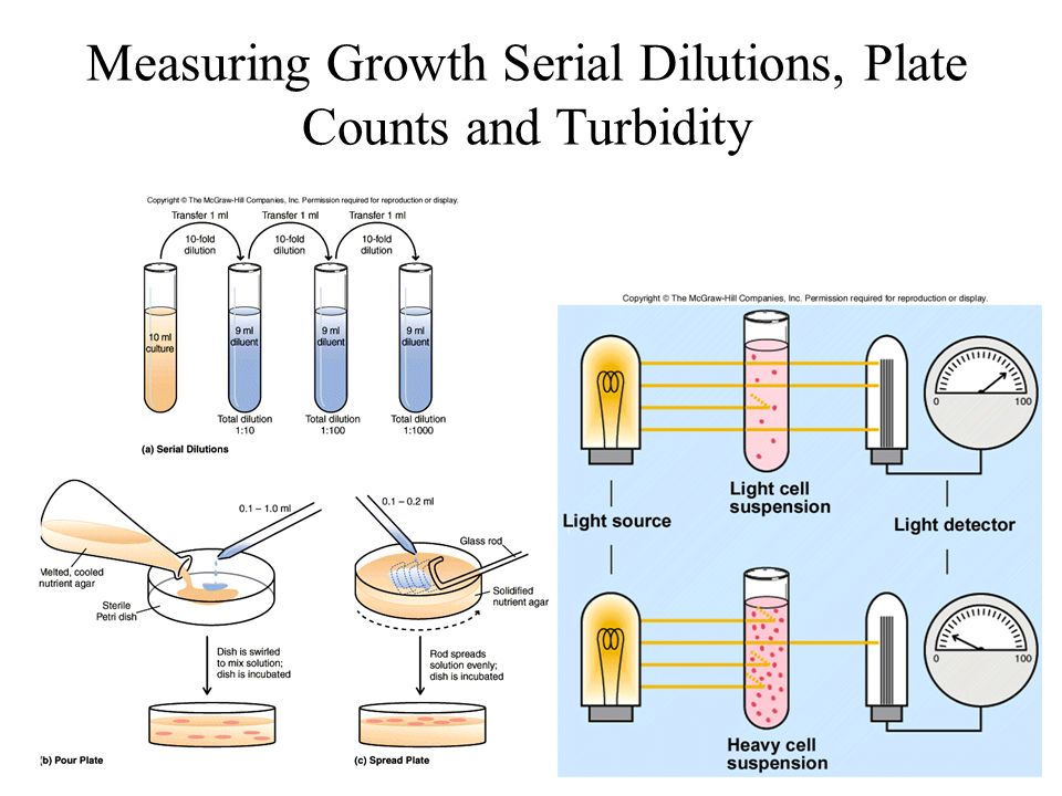Measuring Growth Serial Dilutions, Plate Counts and Turbidity