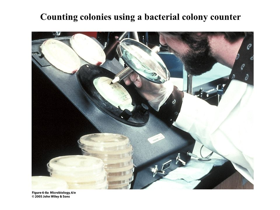 Counting colonies using a bacterial colony counter