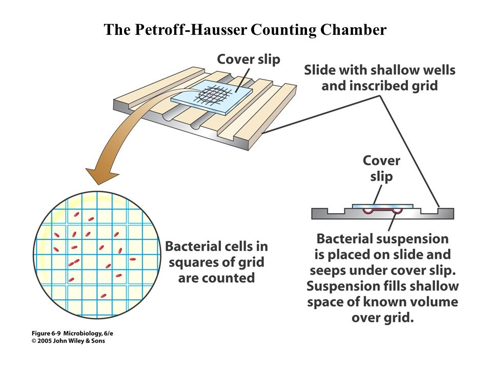 The Petroff-Hausser Counting Chamber