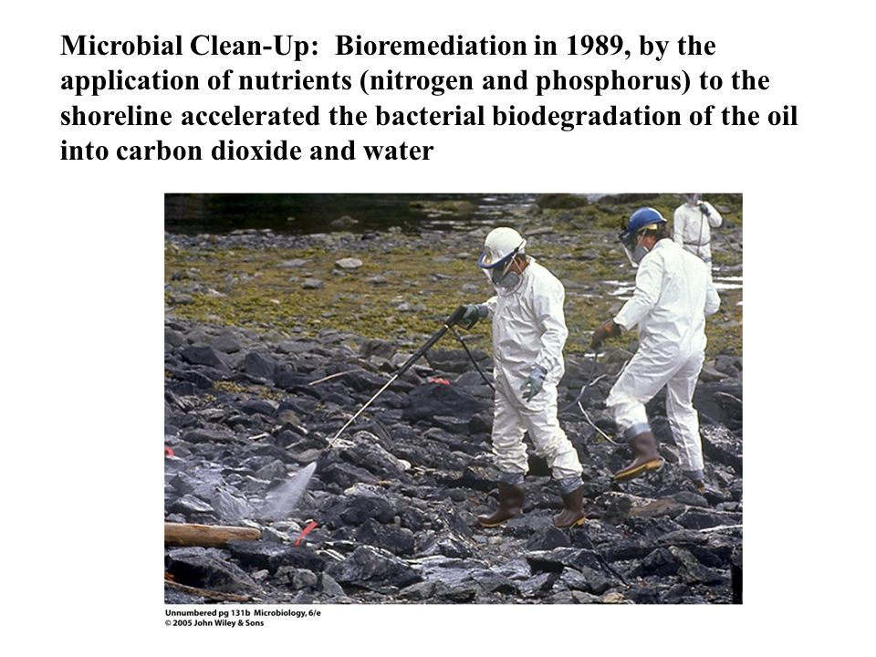 Microbial Clean-Up: Bioremediation in 1989, by the application of nutrients (nitrogen and phosphorus) to the shoreline accelerated the bacterial biodegradation of the oil into carbon dioxide and water