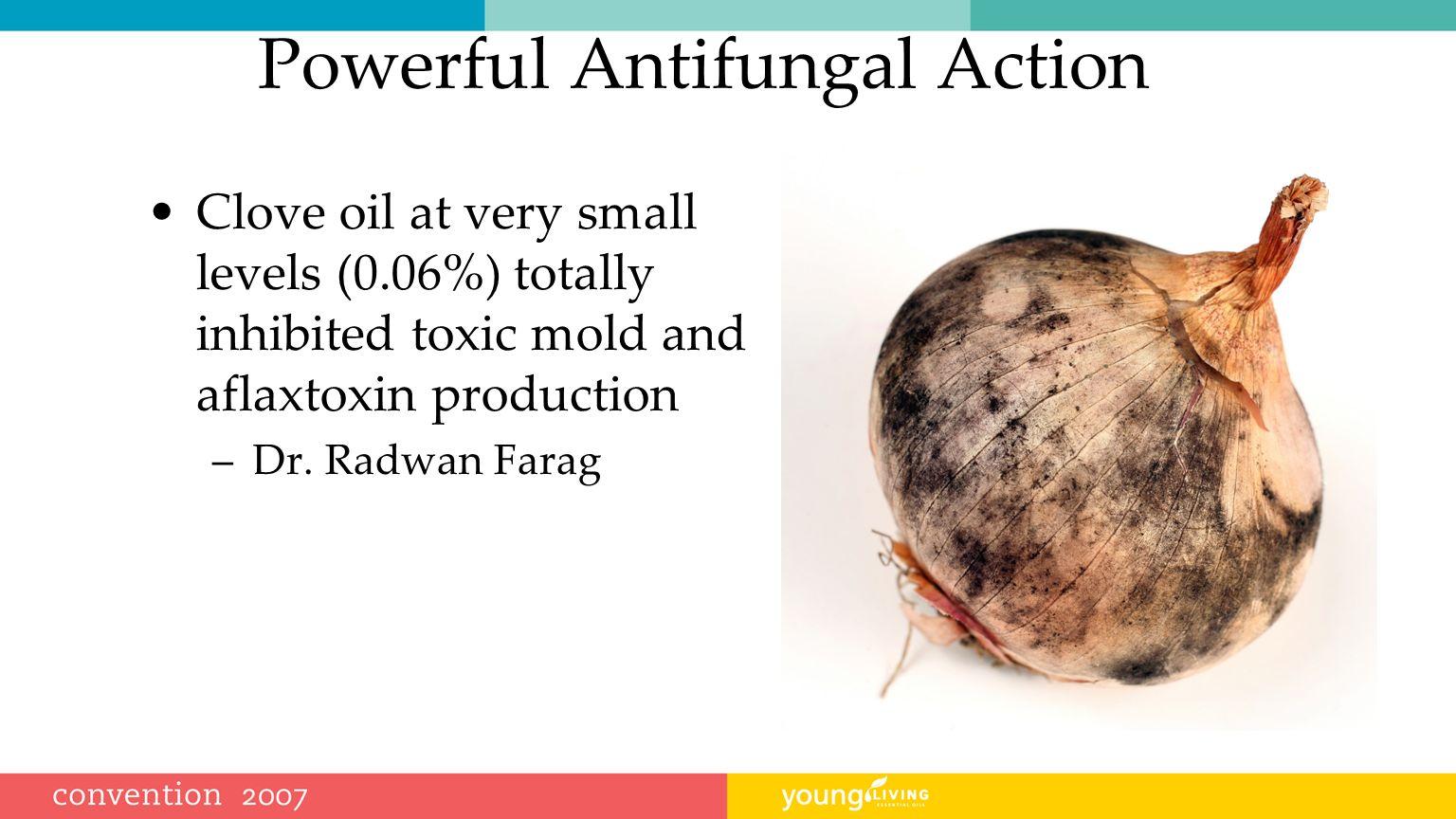 Powerful Antifungal Action