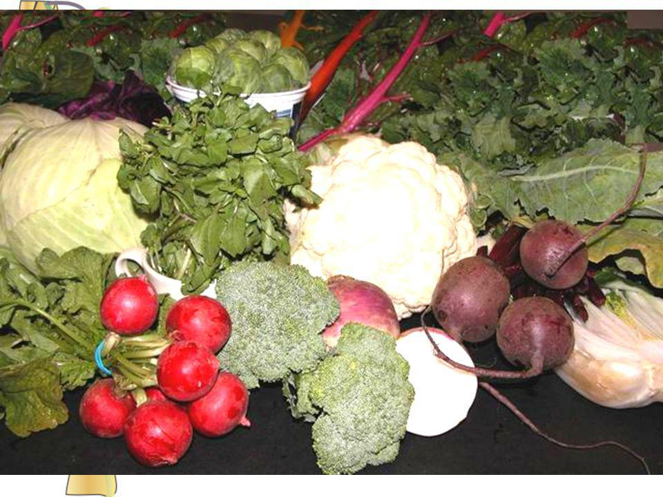 Cruciferous vegetables include all vegetables that have a cross-shaped flower.