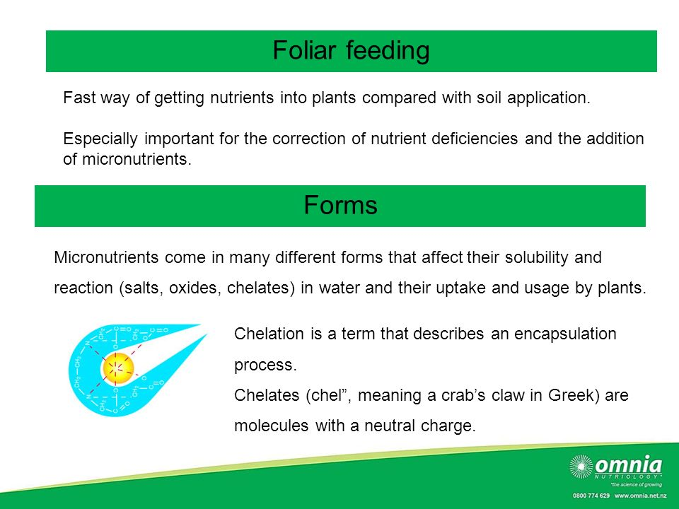 Foliar feeding Fast way of getting nutrients into plants compared with soil application.