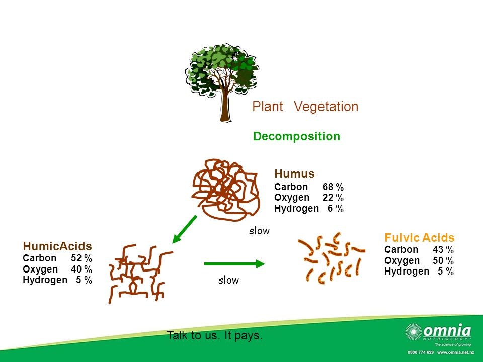 Plant Vegetation Decomposition Humus Fulvic Acids HumicAcids