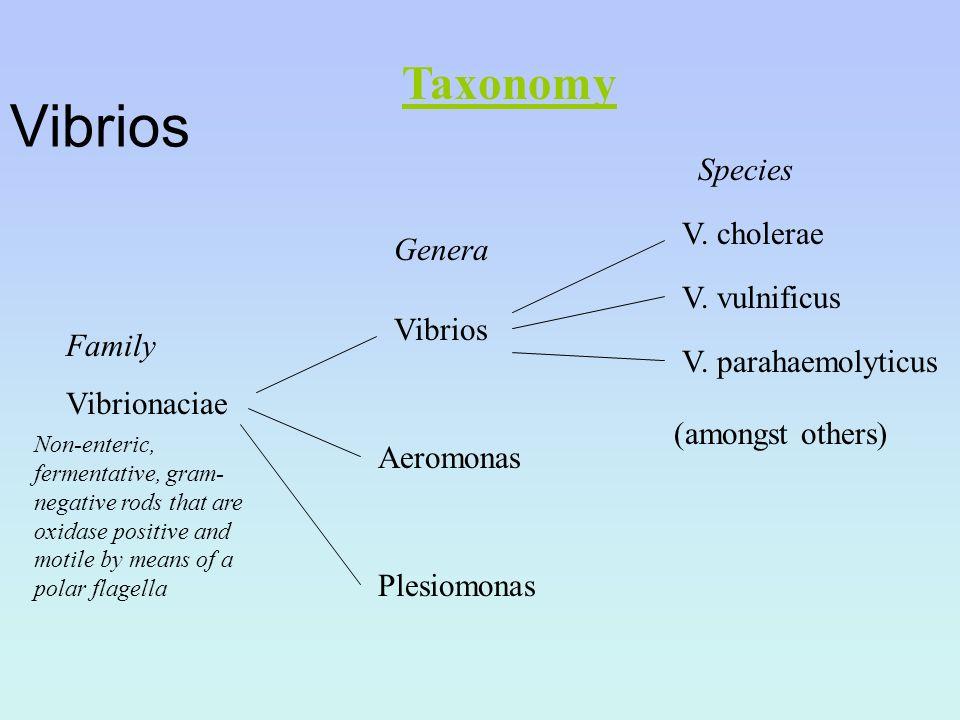 Vibrios Taxonomy Species V. cholerae Genera V. vulnificus Vibrios