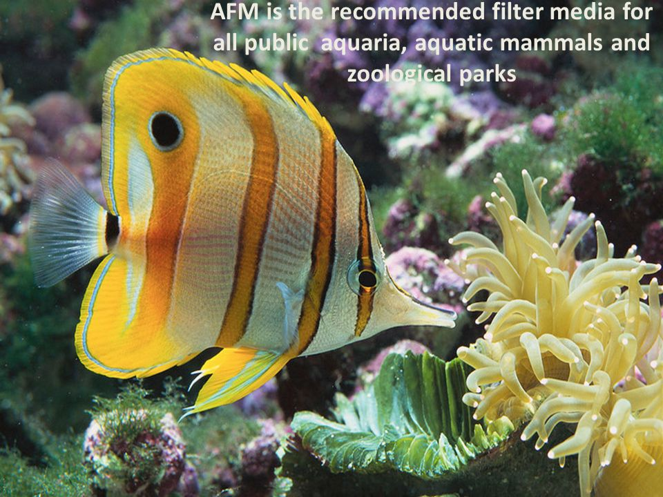AFM is the recommended filter media for all public aquaria, aquatic mammals and zoological parks