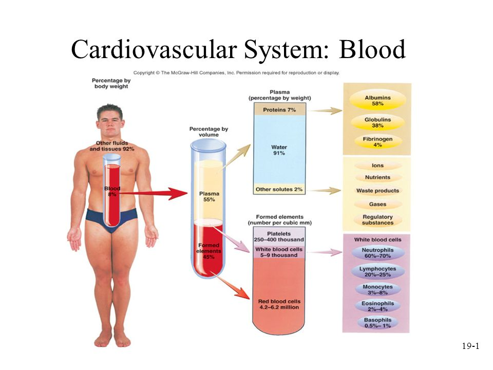 Cardiovascular System Blood Ppt Video Online Download