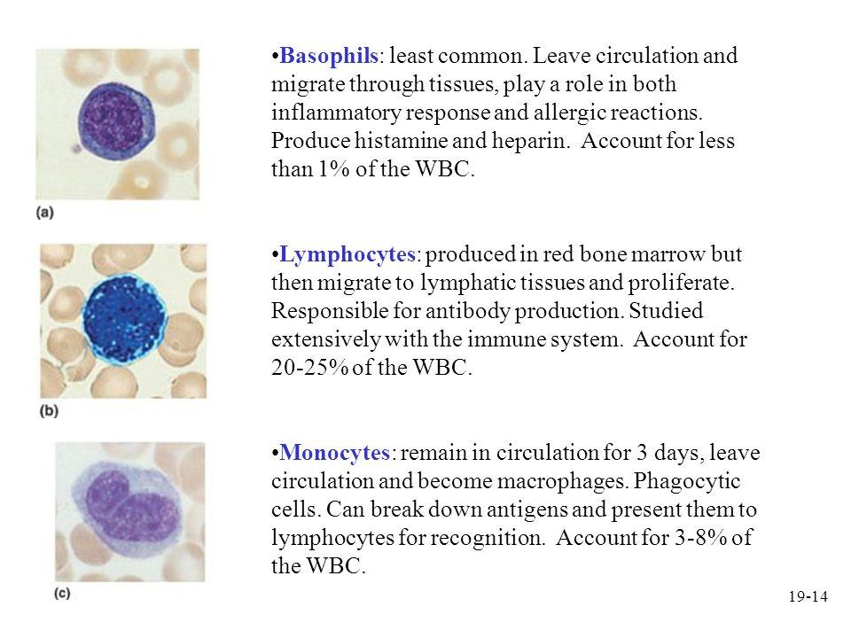 Basophils: least common