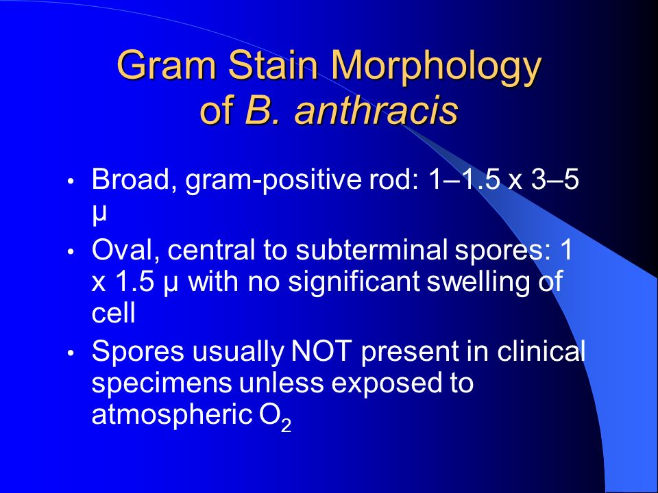 Gram Stain Morphology of B. anthracis
